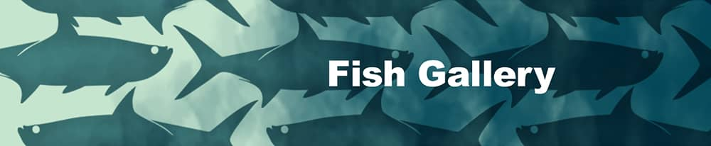 Link to see custom-upf-fish-image-gallery
